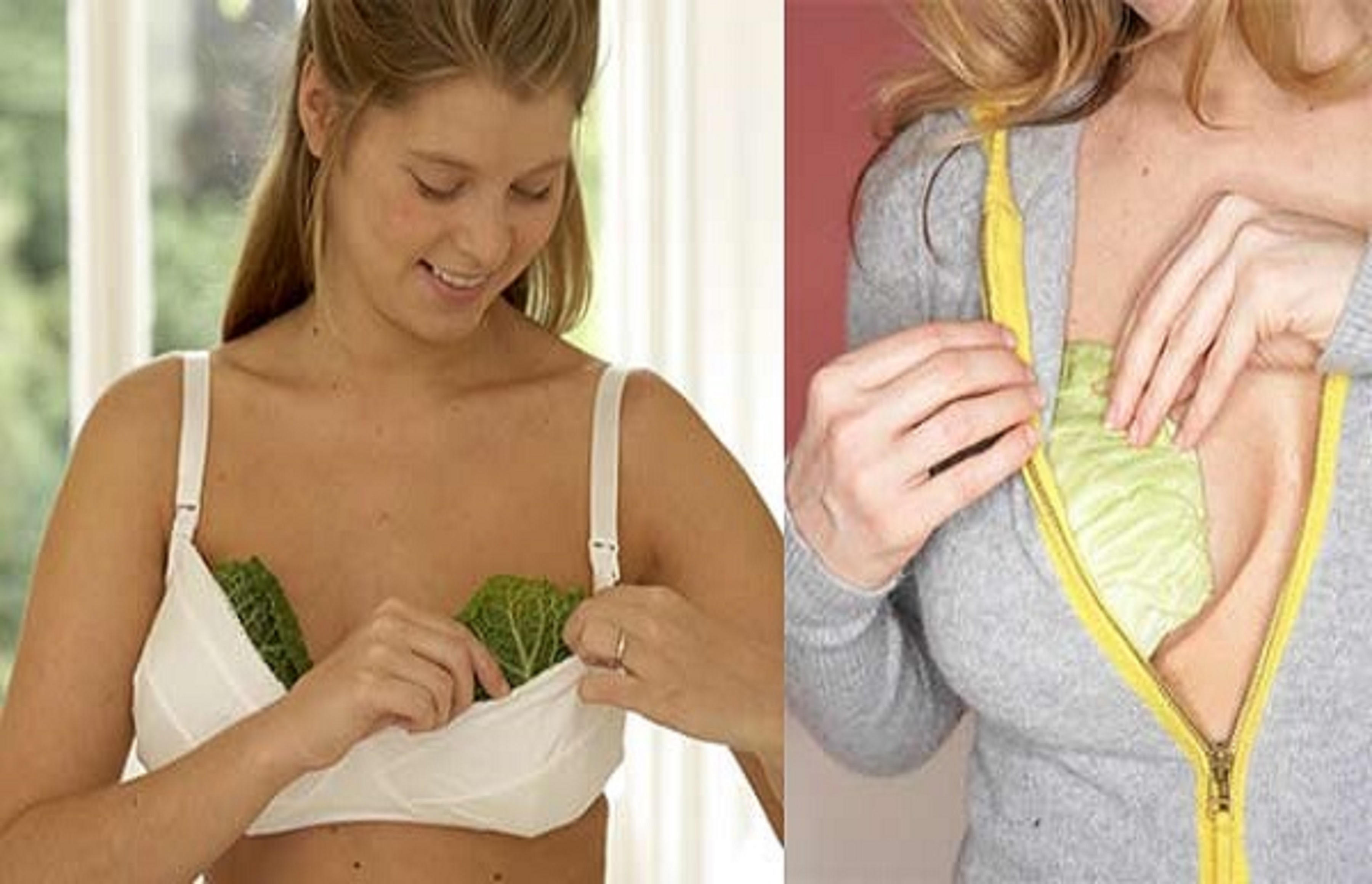 The Reason why Women Put Cabbage leaves on their Breasts | eHealthFeed